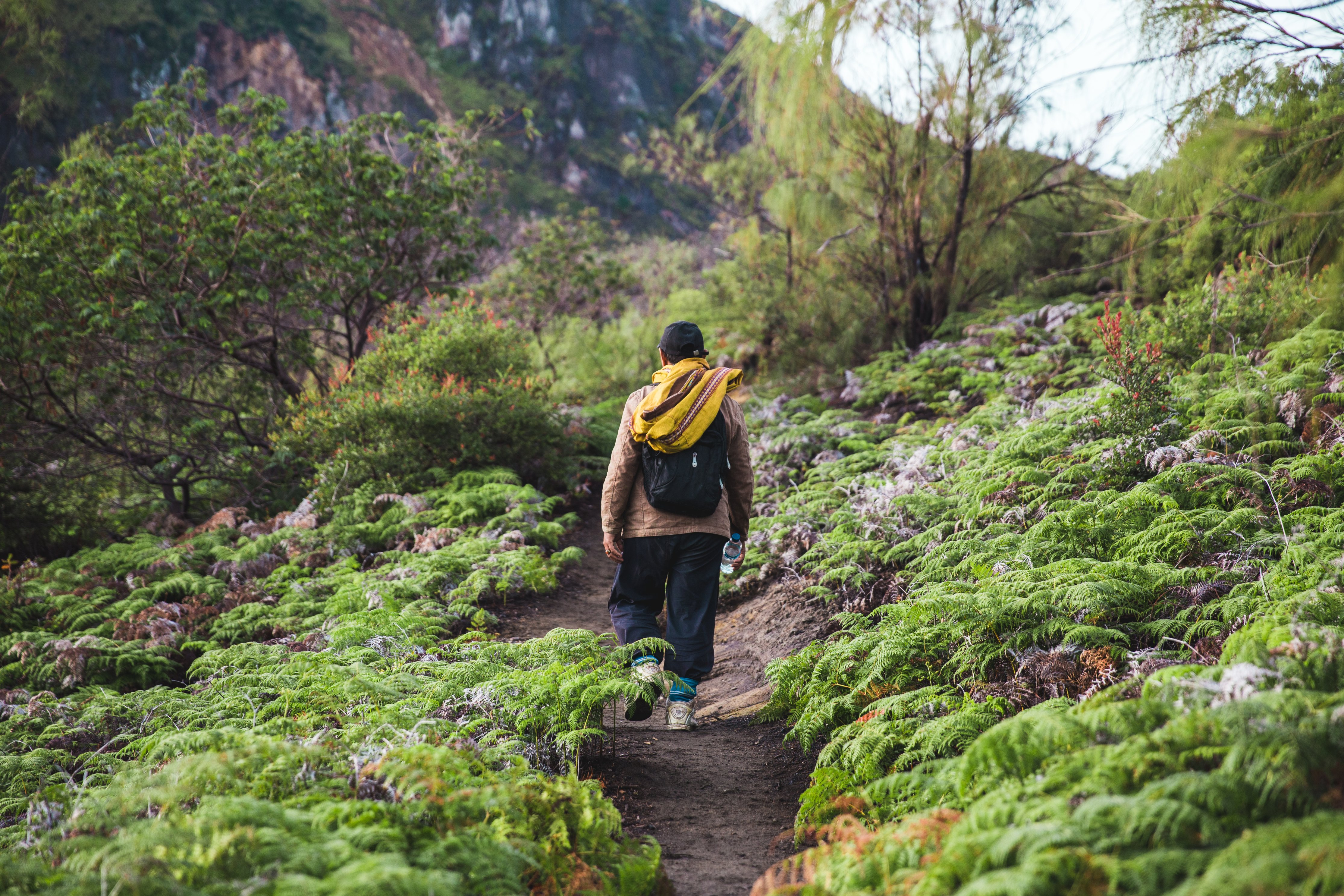 hiking-the-path-up